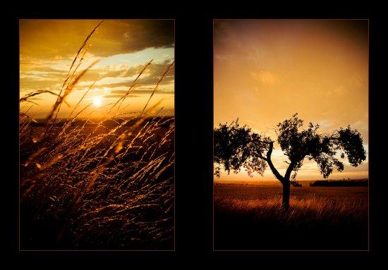 Landschaft_20090712_0005.jpg