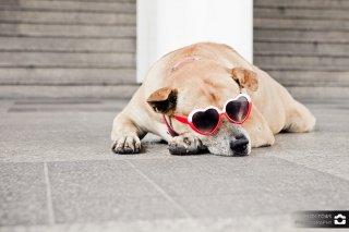 Schlafender Hund an der Skytrain in Bangkok