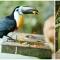 suedafrika_064: Birds of Eden, weltgrößtes Vogelfreigehege